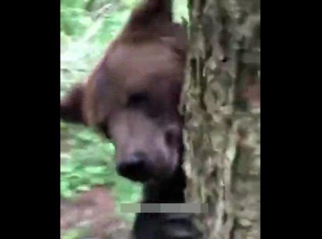Лайфхак: как спасаться от медведя