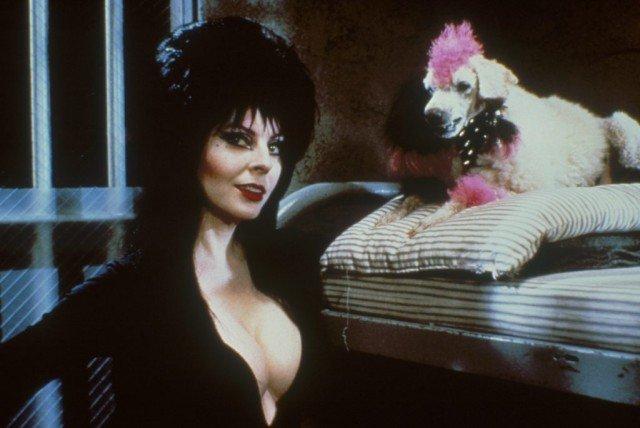 Кассандра Петерсон (Эльвира - повелительница тьмы) в черном платье рядом с собакой