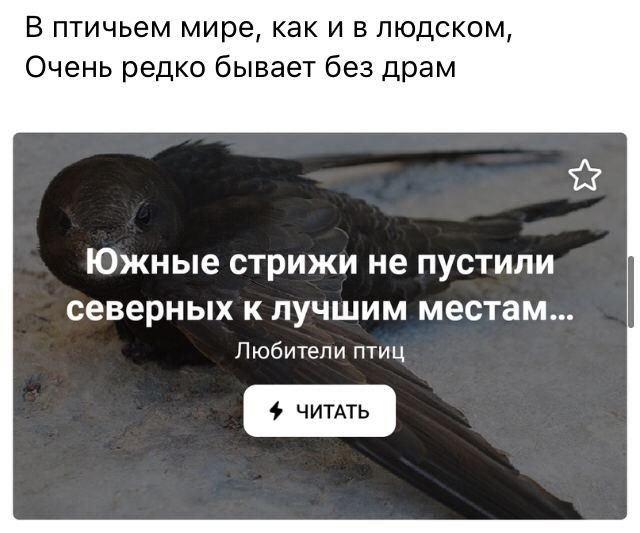 стих про птиц