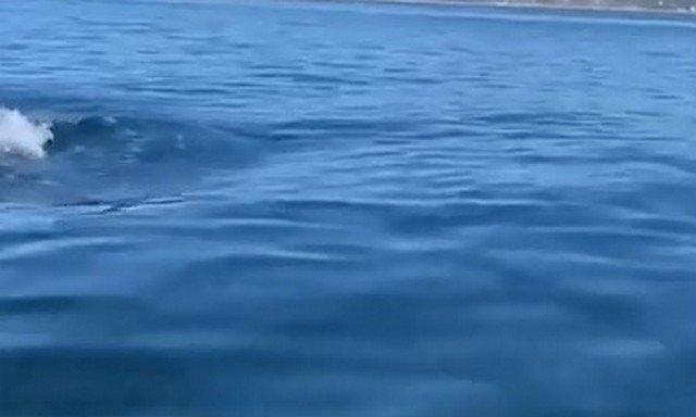 Вода и касатки в ней