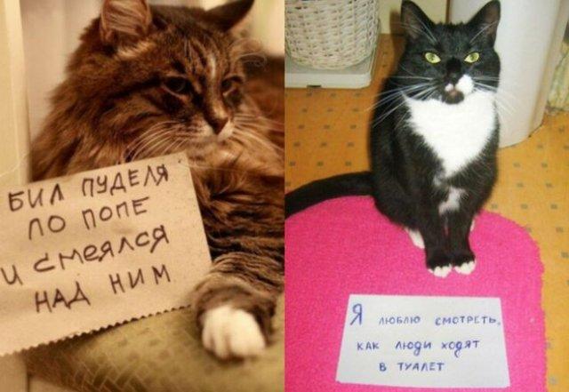 Пользователи рассказали, в чем провинились их коты