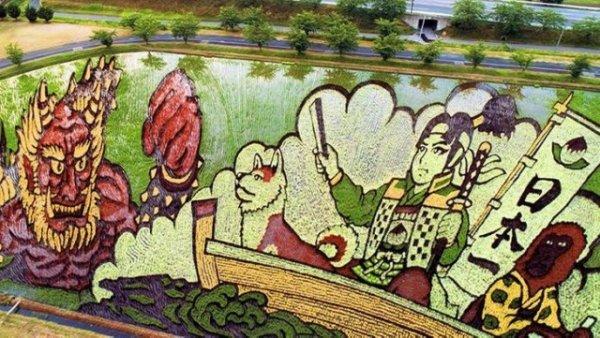 Рисовые поля в Японии с высоты птичьего полета