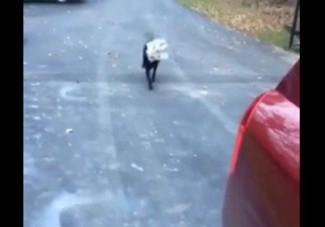 Забавный фейл в исполнении пса, доставляющего газету