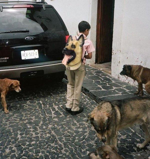 Как нанести собакам психологическую травму
