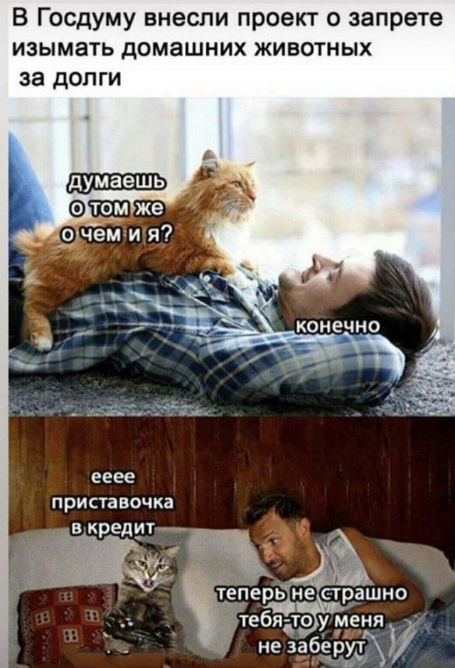 Шутка про животных