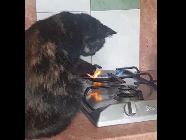 Кот поджаривает и вылизывает собственную лапу