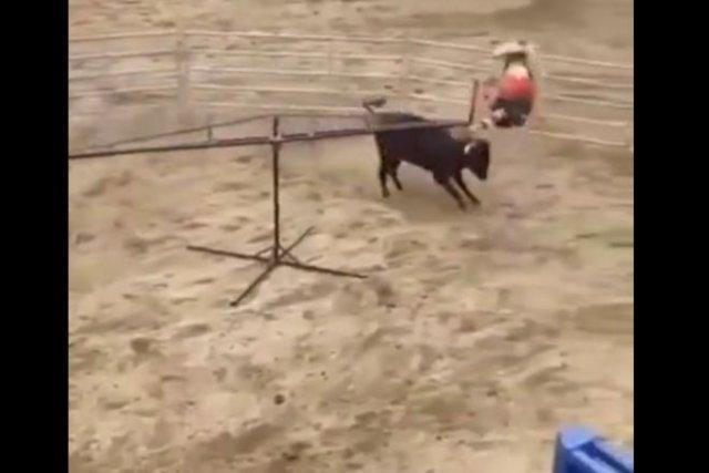 Необычные качели с быком