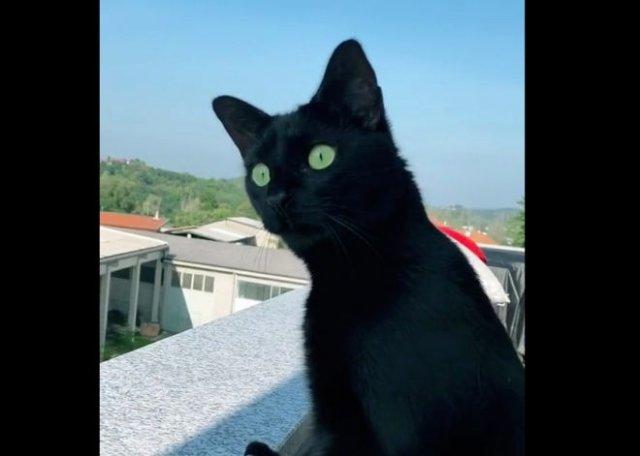 Смешная реакция кота на соседский конфликт