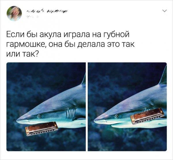 твит про акулу