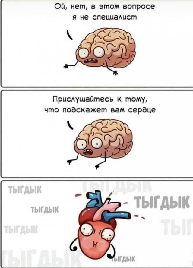 Картинка про мозг