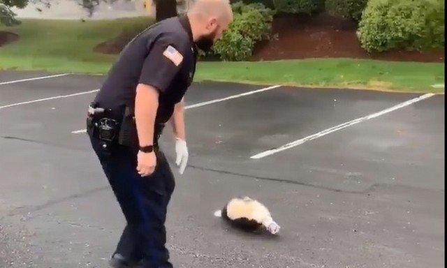Полицейский помогает скунсу
