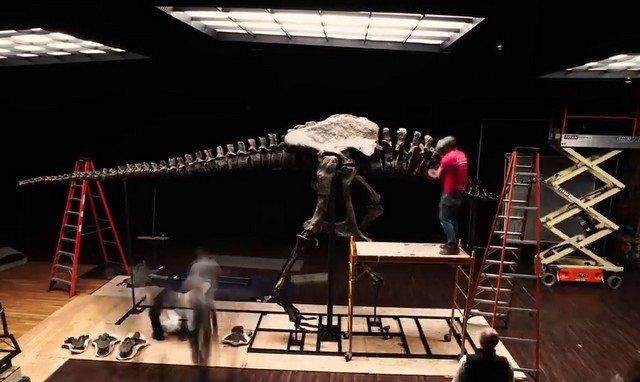 Скелет тирранозавра Стэна