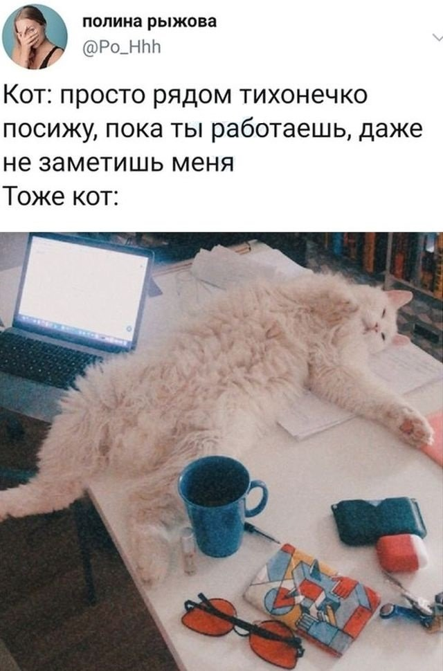 твит про кота