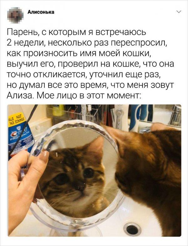 твит про кошку