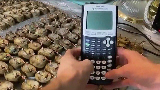 Картошка и калькулятор