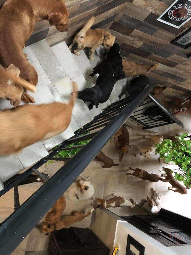 Рикардо Пиментель взял домой 300 кошек и собак