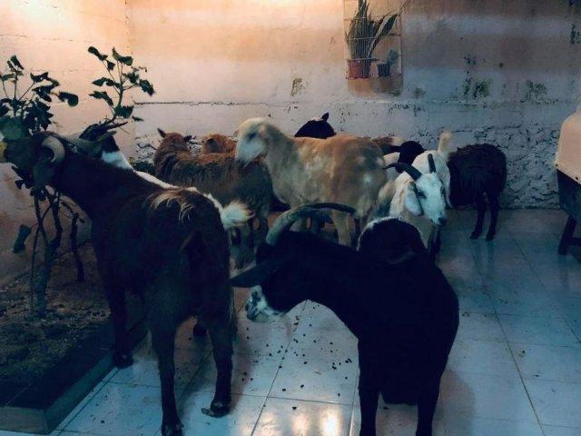 Рикардо Пиментель и его животные из приюта