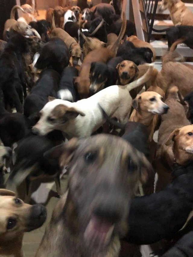 Рикардо Пиментель и собаки