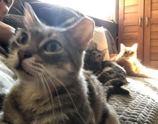 Рикардо Пиментель и кошки