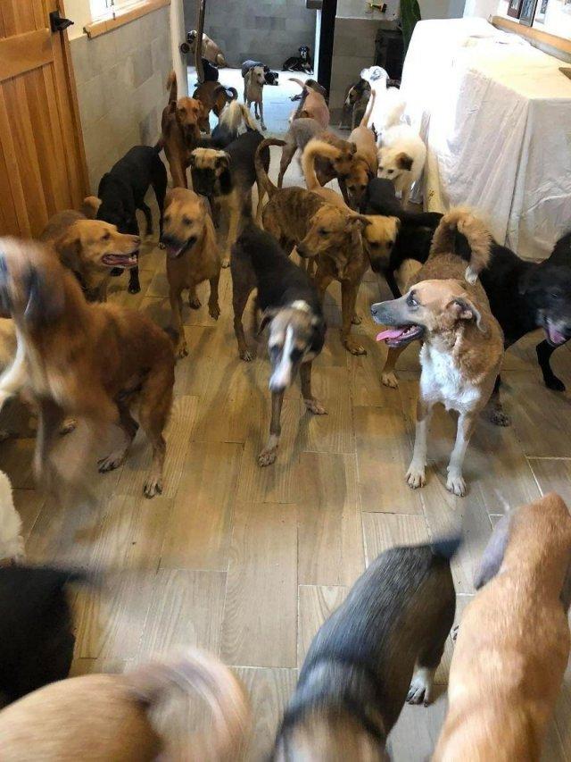Собаки из мексиканского приюта