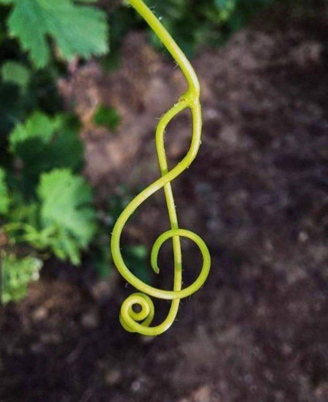 Музыкальный ключ из растения