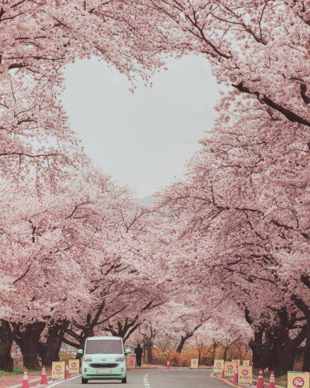 Сердечко из деревьев