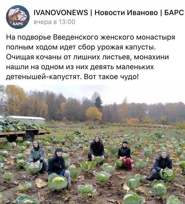 Новости урожая