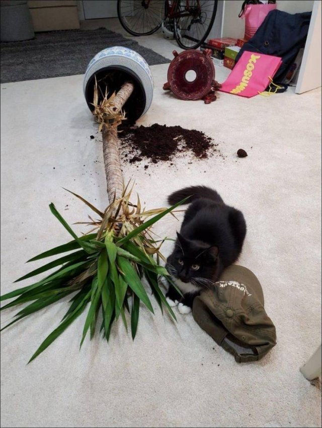 Кот испортил цветок