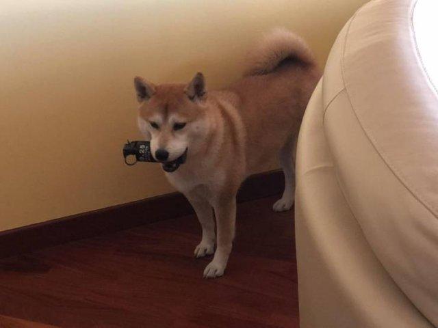 Собака с гранатой
