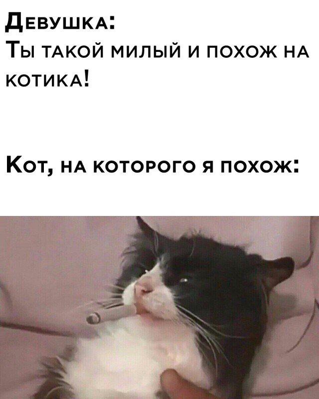 Такой милый, как кот