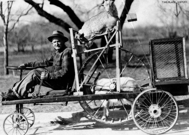 Американский фермер демонстрирует свое транспортное средство. Приводится в движение козлом, который находится в беговом колесе. Козломобиль мог достигать скорости до 15 км/ч. Козёл–запаска вверху.