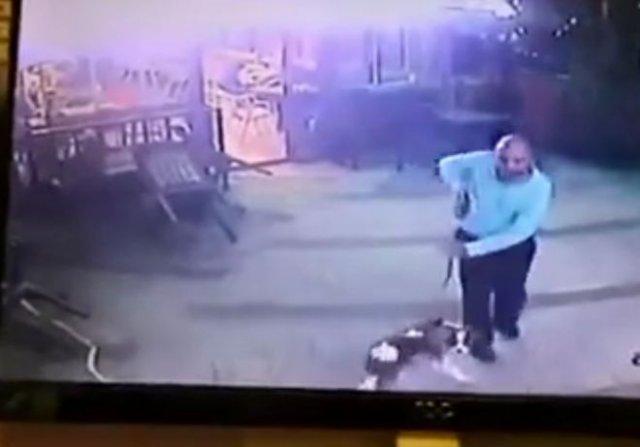 Кот не пустил на территорию мужчину с собакой, вступив с ним в бой и даже стянув штаны