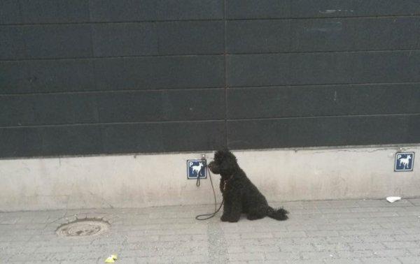 Для собак выделили специальные парковочные места