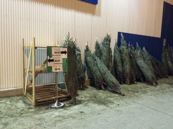 В Канаде есть магазины, где можно купить елку