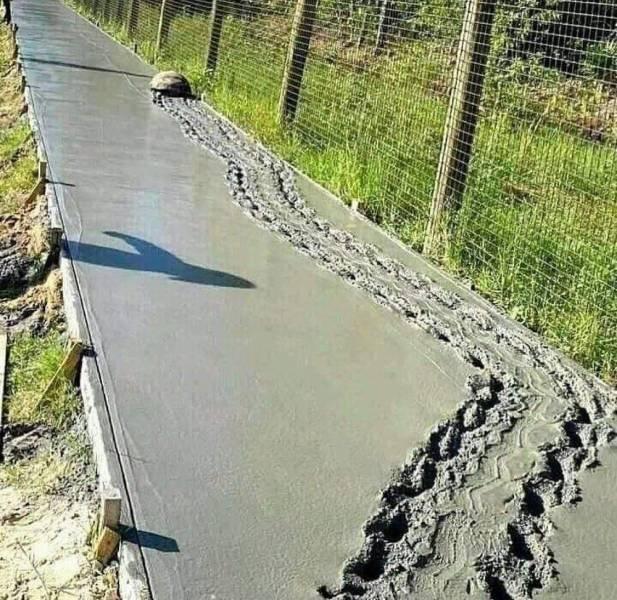 Черепаха на бетоне