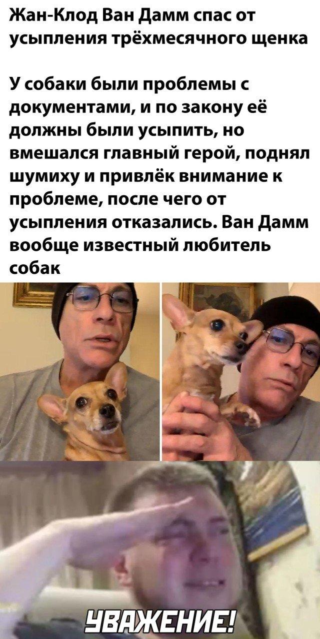 Спас щенка