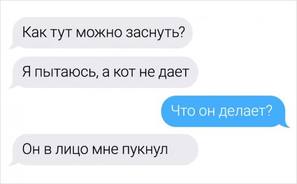 диалог про кота
