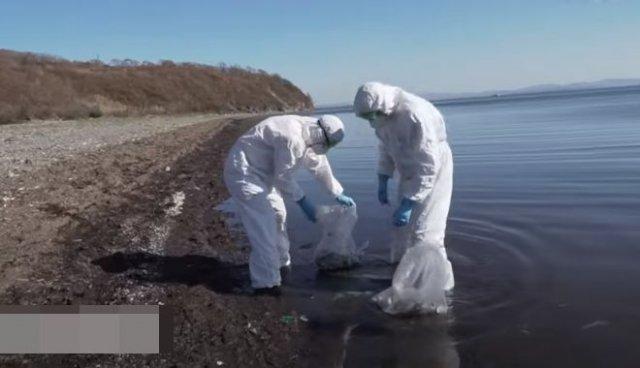 Виталий Наливкин борется с экологической катастрофой на Камчатке