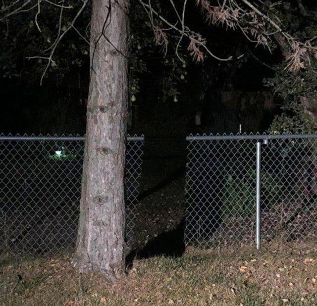 Тень от дерева создала иллюзию проема в заборе