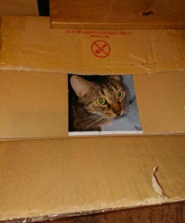 Это фото на Polaroid или реальный кот?