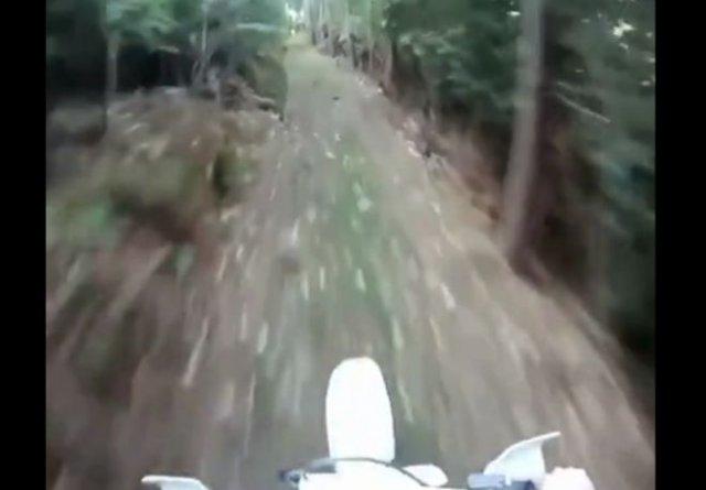 Баран против мотоциклиста