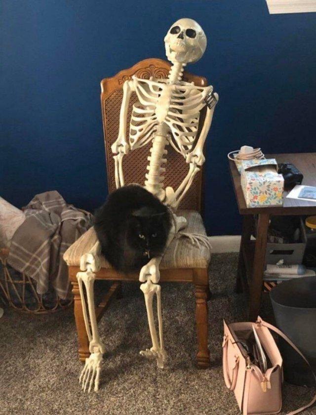 Кот сидит на скелете