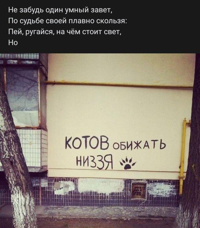 стих про котов