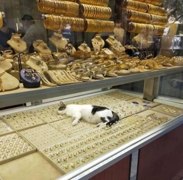 Кот в ювелирной лавке