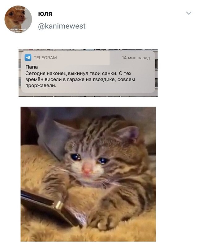 твит про санки