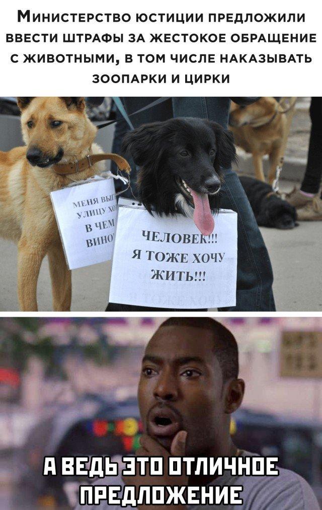 Штраф за жестокое обращение с животными