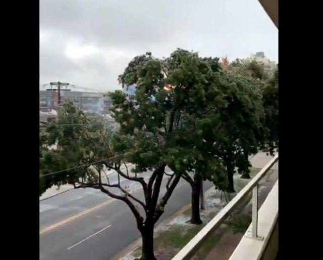 Красивые кадры: оголенный провод и деревья