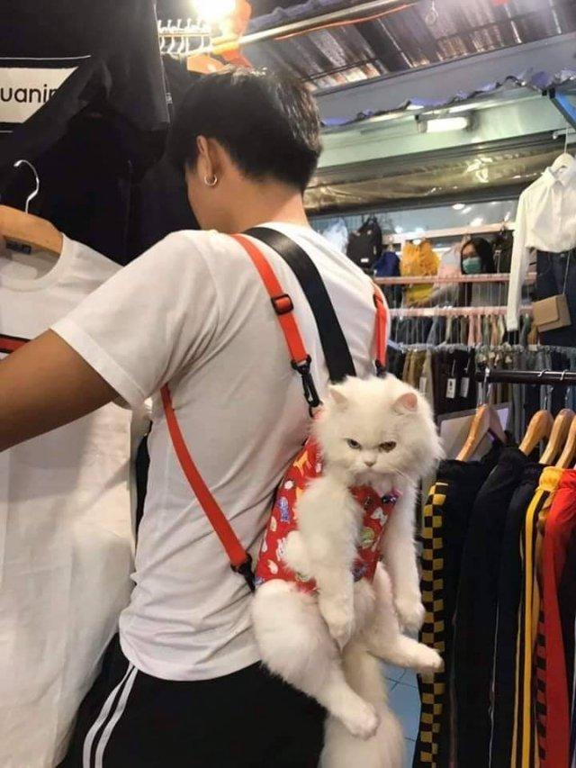 Кот на спине