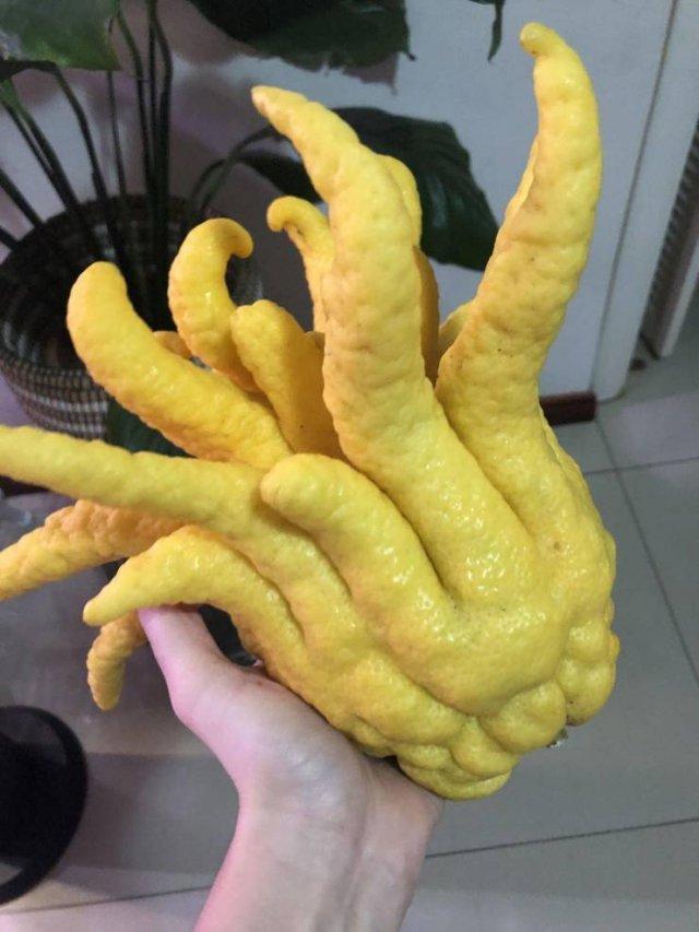 Лимон странной формы