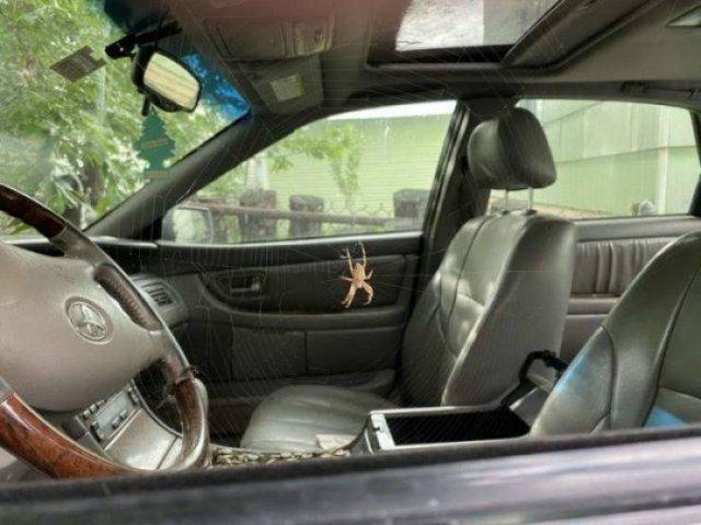 Паук в автомобиле